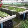 ฟาร์มผักในบริเวณร้าน