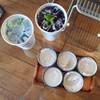 น้ำผึ้งมะนาวอัญชัน กับ ขนมถ้วย