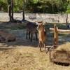 สวนสัตว์เชียงใหม่