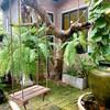 Coffee•Tree นนทบุรี