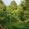 สวนอรุณบูรพา