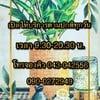 เรือนพชร นวดแผนไทย