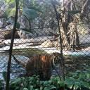 กรงเสือ