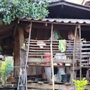 ลักษณะบ้านทรงของชาวปะกาเกอะญอบ้านขุนแปะ