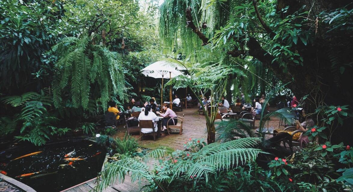 Fern Forest Cafe -