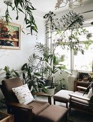 Masonia Tree & Coffee Cafe