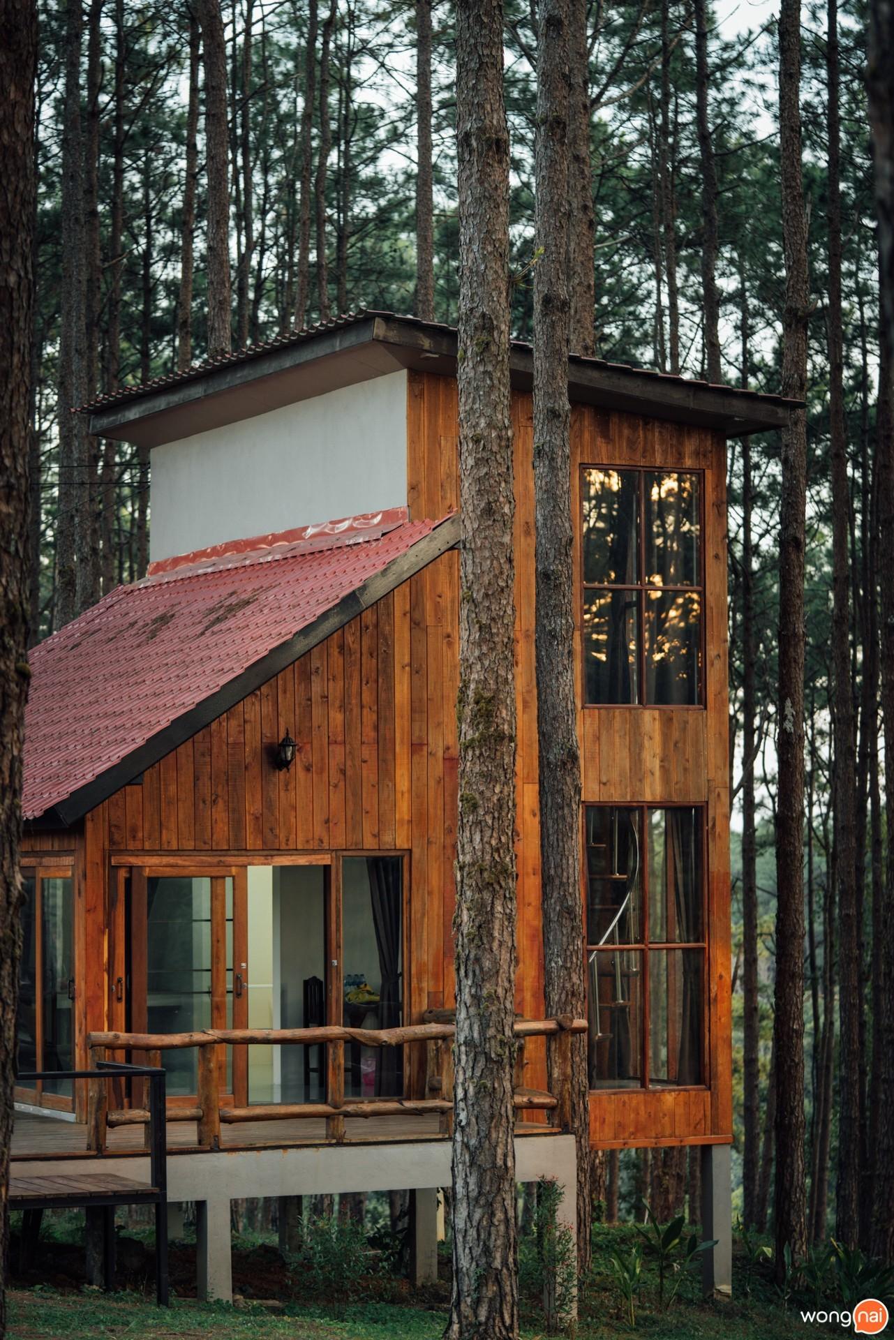 เที่ยวเชียงใหม่ , ที่เที่ยวเชียงใหม่ , อุทยานแห่งชาติออบหลวง , สวนสนบ่อแก้ว , สวนป่าดอยบ่อหลวง, เที่ยวป่าสนเชียงใหม่