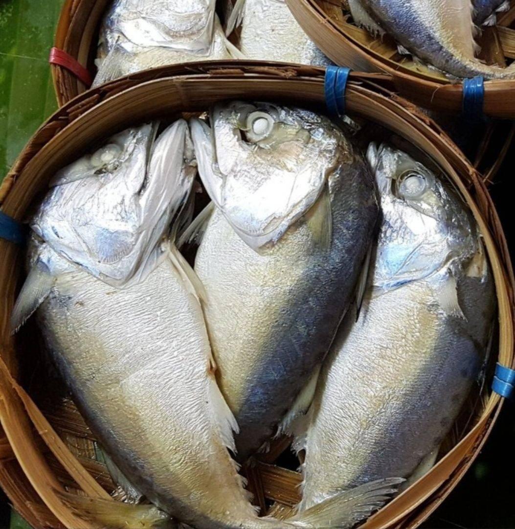 ปลาทูนึ่ง เข่งละ 25##1 • จืด มัน ไม่เค็ม ไซส์ M ค่ะ ร้าน ปลาทูนึ่งแม่กลอง  เจ๊หน่อย ตลาดปากทางหมู่บ้านเศรษฐกิจ - Wongnai