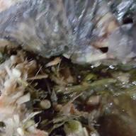 อึ่งปลาเผา สูตรเด็ด...เจ้าเก่า
