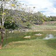 Donsak Orchid Resort (สวนกล้วยไม้ดอนสัก)