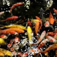 ครัวสวนปลา
