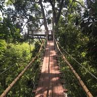 Tree Bridge Coffee