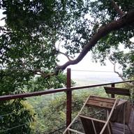 บรรยากาศ Tree Bridge Coffee