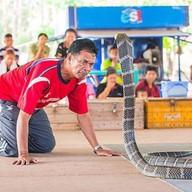 บรรยากาศ หมู่บ้านงูจงอาง