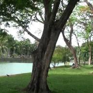 บรรยากาศ สวนเสรีไทย