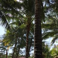 สวนย่าเกาะกูดรีสอร์ทแอนด์สปา