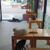 บรรยากาศ Fat Cat Cafe Club