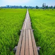 บรรยากาศ สะพานไม้ร้อยปี