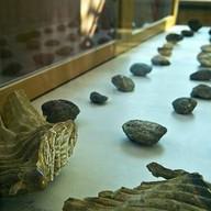 บรรยากาศ พิพิธภัณฑ์หอยหิน 150 ล้านปี