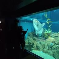บรรยากาศ Osaka Aquarium Kaiyukan