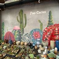 บรรยากาศ Coffee By Pae Cactus