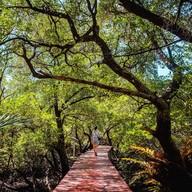 บรรยากาศ เส้นทางศึกษาธรรมชาติป่าชายเลนบ้านสลักคอก