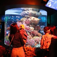 บรรยากาศ Sea Life Bangkok Ocean World