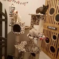 บรรยากาศ โรงพยาบาลสัตว์และโรงแรมสัตว์เลี้ยง สุวรรณภูมิแอร์พอร์ต (SA Pet Hospital & Hotel)