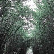ซุ้มป่าไผ่ วัดจุฬาภรณ์วนาราม