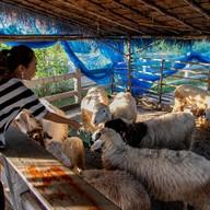 บรรยากาศ 9 Tamarind Cafe by Nine Phetchabun Farm