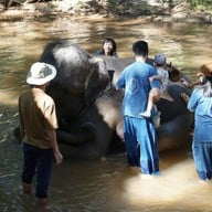 บรรยากาศ ปางช้างแม่สา