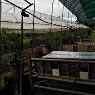 สวนกุหลาบห้วยผักไผ่ ศูนย์พัฒนาโครงการหลวงทุ่งเริง