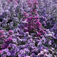 I love flower Farm