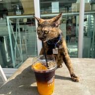 AREA 67 CAFE'