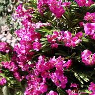 บรรยากาศ The Blooms Orchid Park