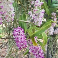The Blooms Orchid Park