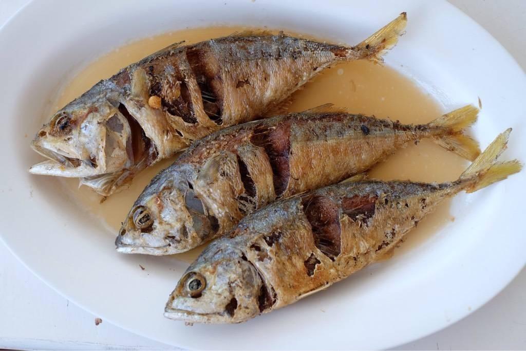 ปลาทูนที หัวหิน