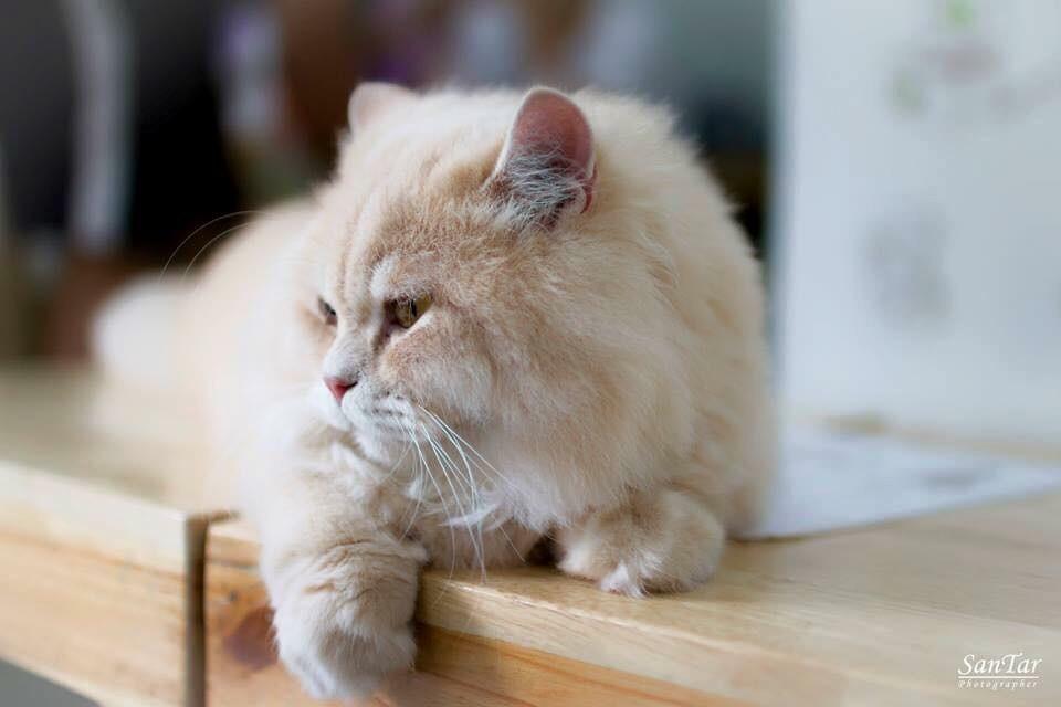 Fat Cat Cafe Club