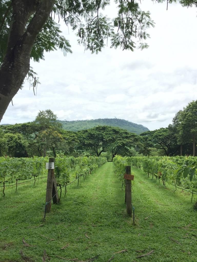 Village Farm & Winery