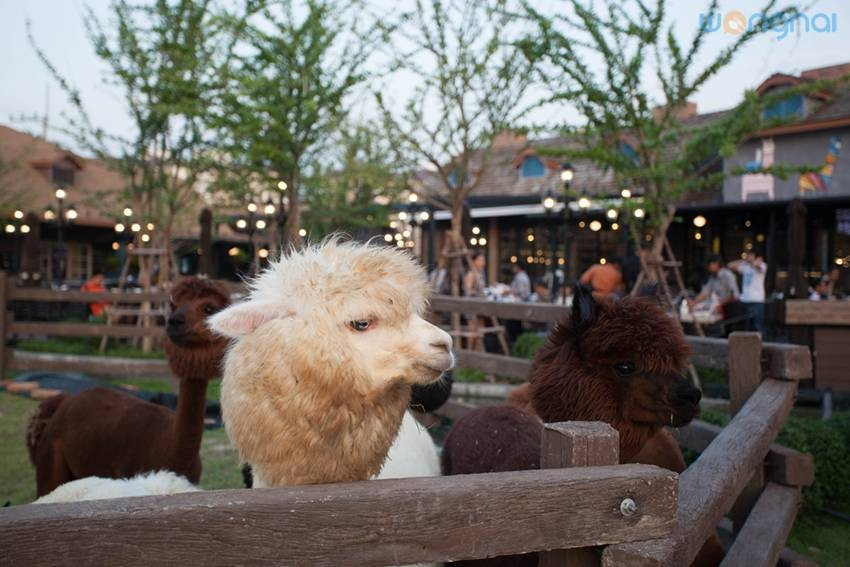 Alpaca Restaurant Cha-Am