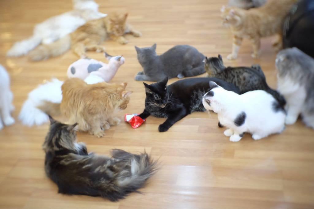 น้องแมวเยอะมากจีจี