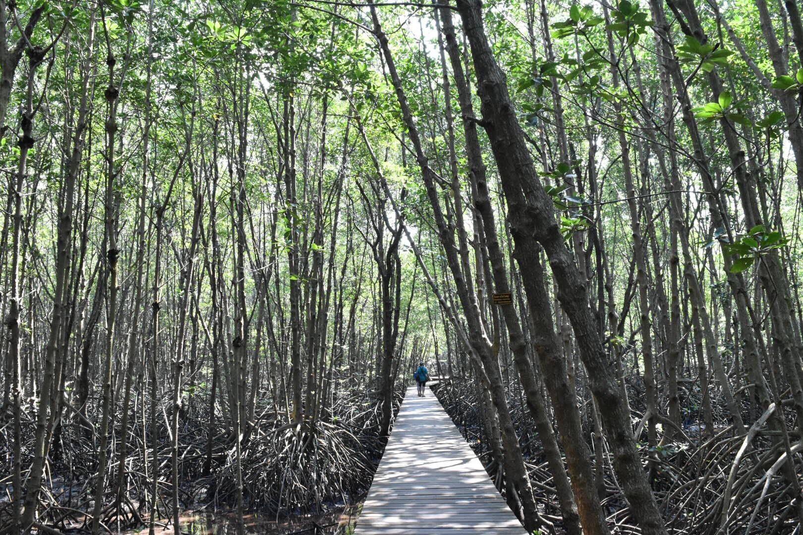 ศูนย์ศึกษาการพัฒนาอ่าวคุ้งกระเบน (ป่าชายเลน)