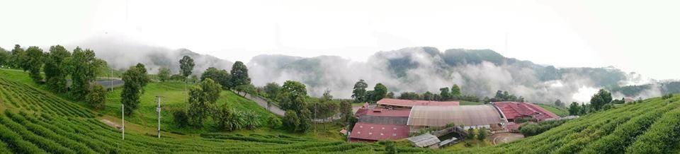 101 Tea Green View Resort
