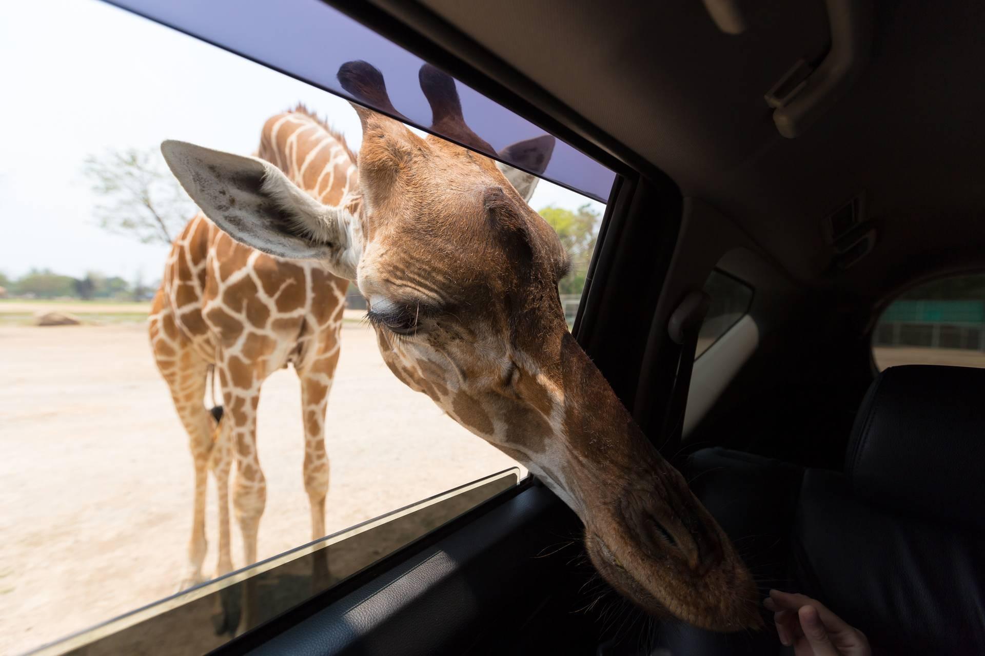 สวนสัตว์เปิด ซาฟารี ปาร์ค