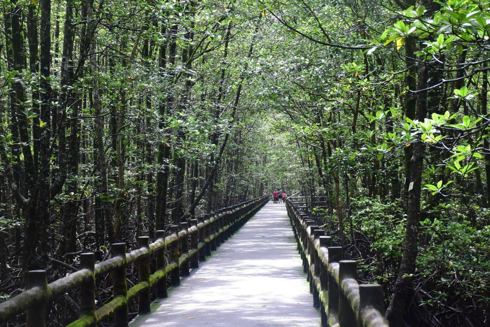 พื้นที่สงวนชีวมณฑลป่าชายเลนระนอง