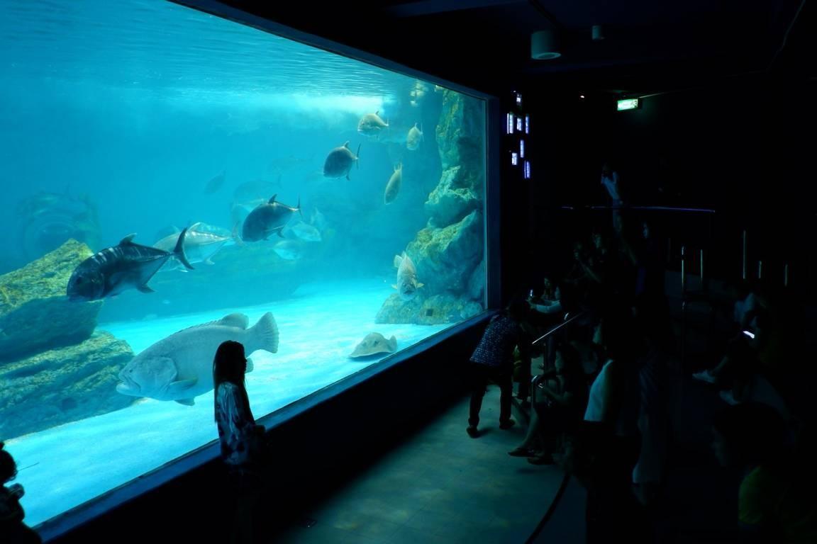 พิพิธภัณฑ์สัตว์น้ำบางแสน