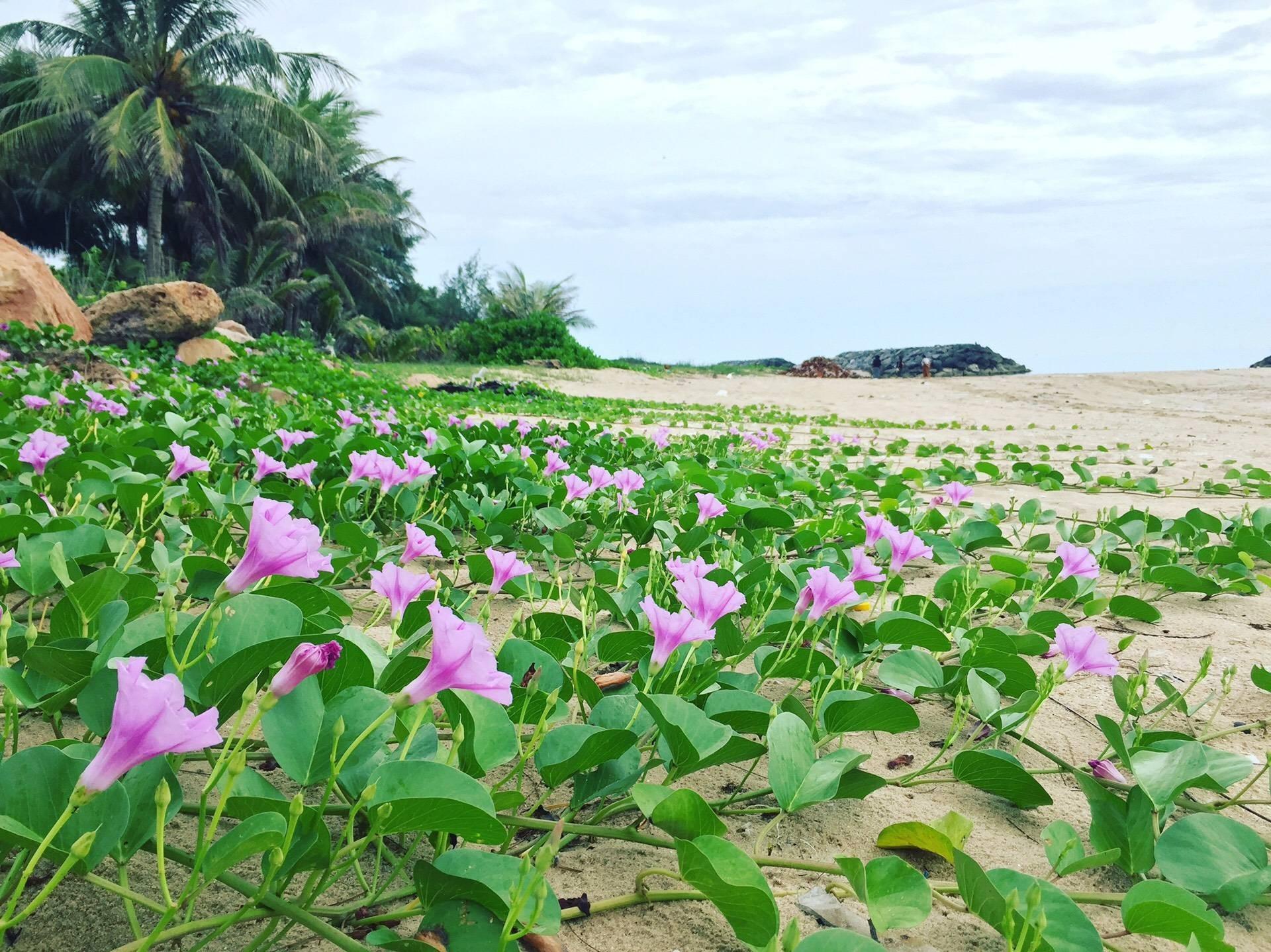 หาดทรายเกาะเพชร