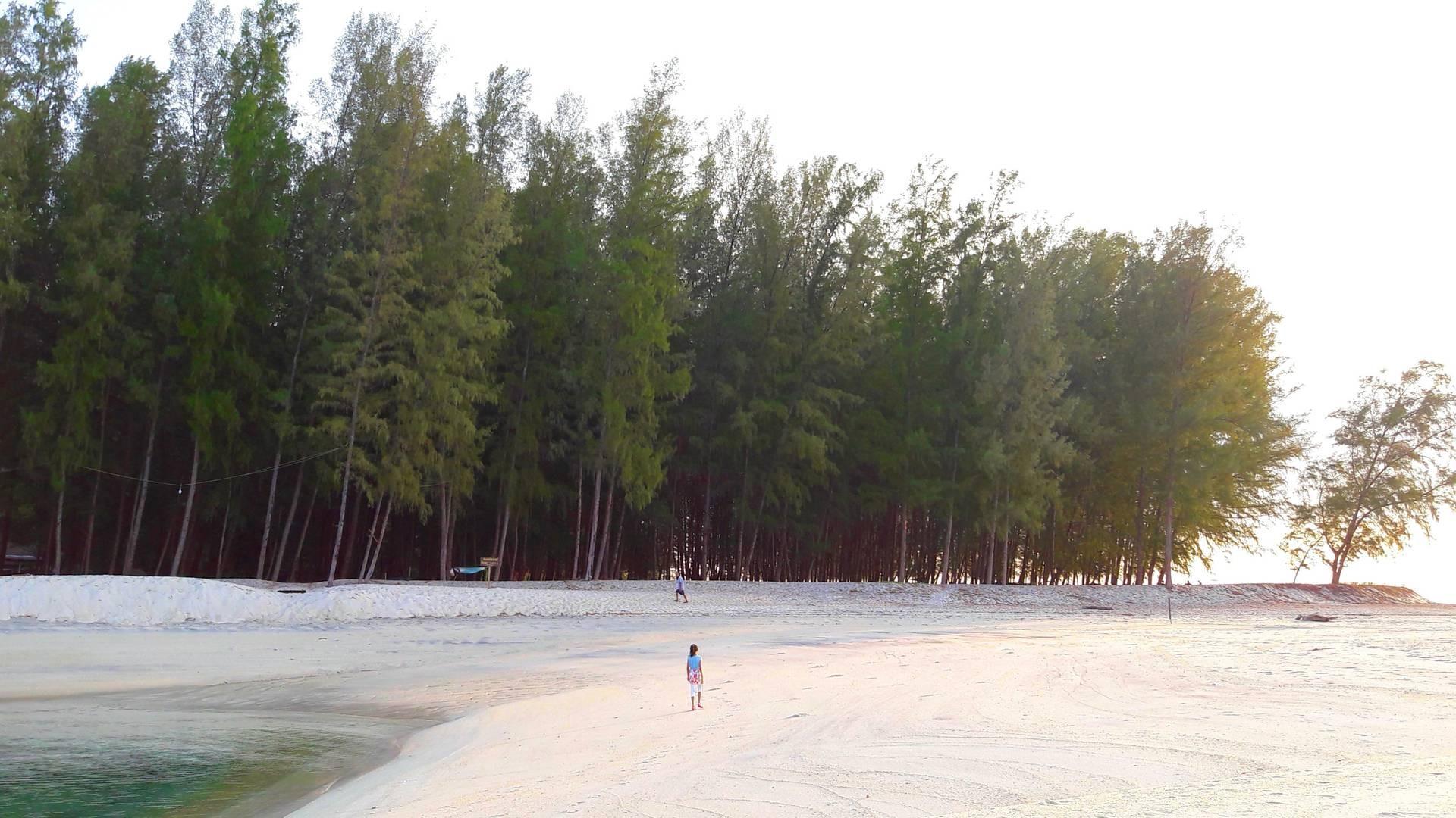 ต้นสนเรียงรายหน้าหาด