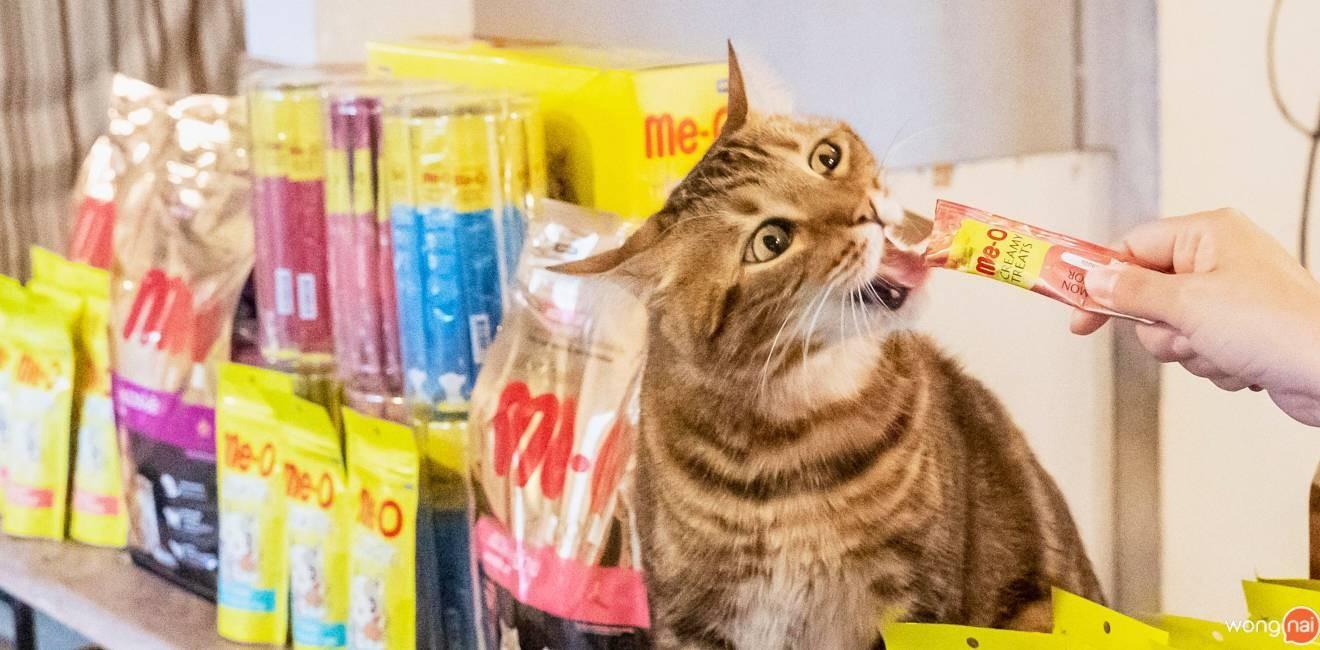 CatNip Cafe'