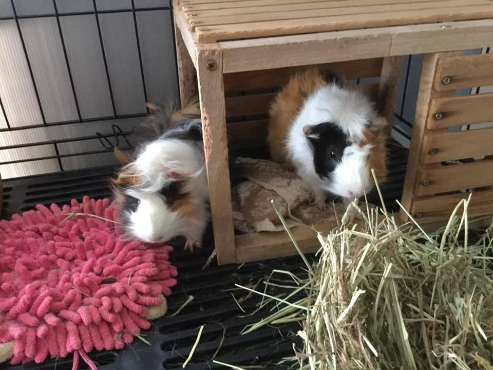 ขอขอบคุณรูปภาพจาก FB รับฝากกระต่าย Bunny Home